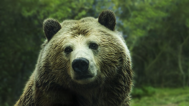 7 Things To Do In A Bear Market